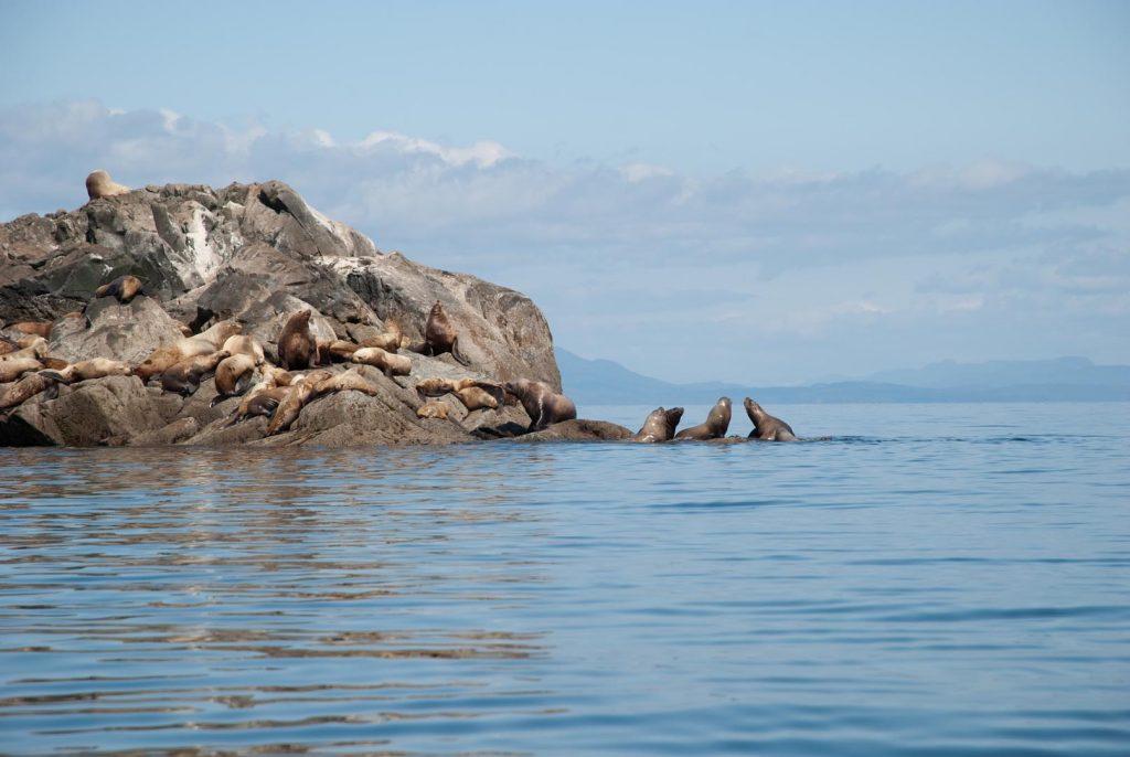 whales & sea lions-29