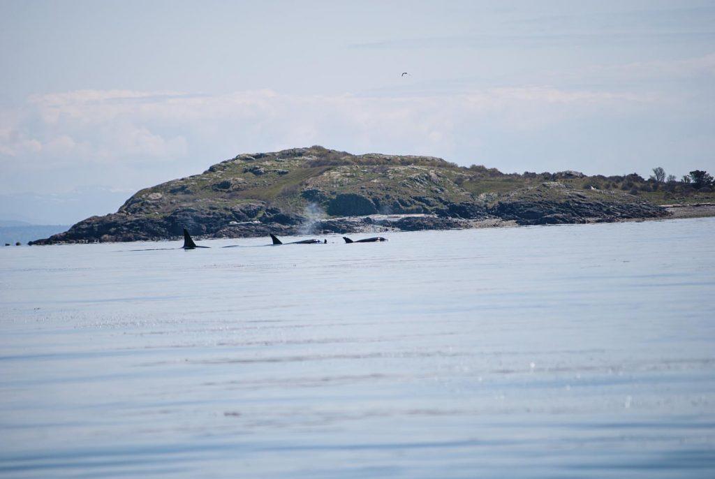 whales & sea lions-36 copy